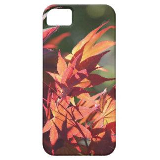 Japanese maple leaf  IPhone case iPhone 5 Cases