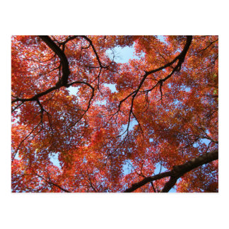 Japanese Maple Leaves in Autumn Postcard