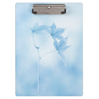 Japanese Maple Leaves in Blue Clipboard