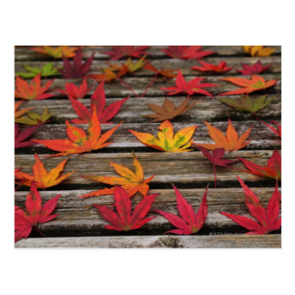 Japanese maple leaves postcard