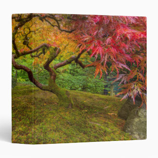 Japanese maple tree in autumn color 3 ring binders