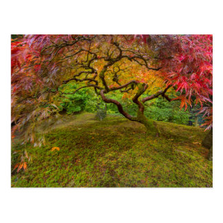 Japanese maple tree in autumn color postcard