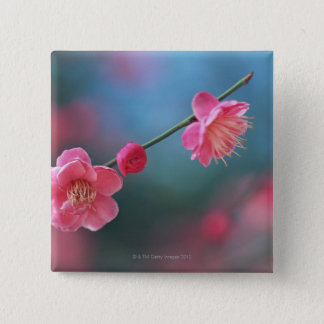 Japanese plum 4 2 inch square button