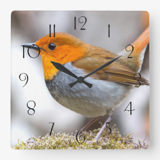 Japanese Robin Square Wall Clock