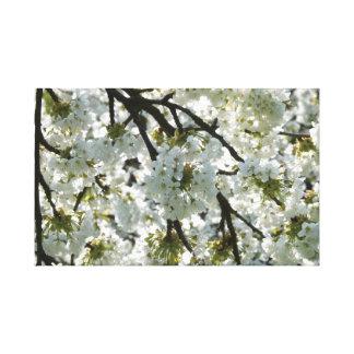 Japanese Sakura. Cherry Blossoms. Canvas Print