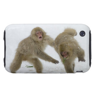 Japanese Snow Monkey cubs playing on snow iPhone 3 Tough Cover