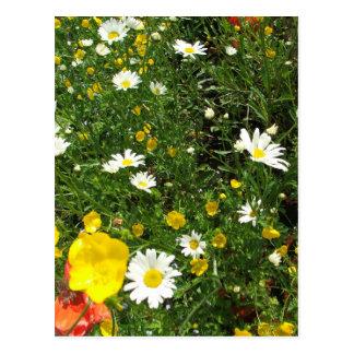Jardin anglais de cottage cartes postales