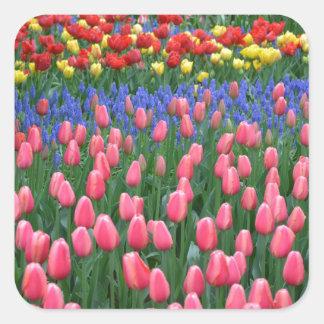 Jardin coloré de tulipe de ressort