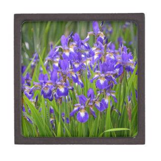 Jardin d'agrément pourpre d'iris coffret cadeau de première qualité