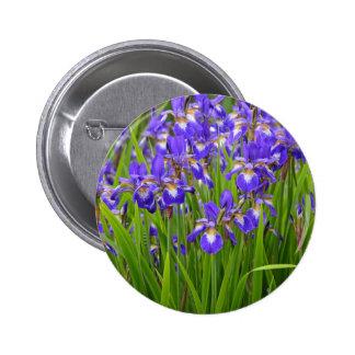 Jardin d'agrément pourpre d'iris badges