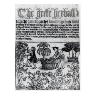 Jardin de herbes aromatiques médiéval carte postale