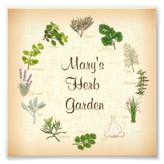 Jardin de herbes aromatiques photographie