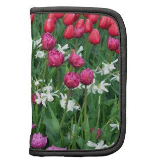 Jardin de jonquilles et de tulipes de ressort