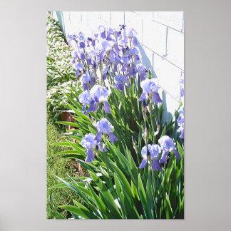 Jardin d'iris posters