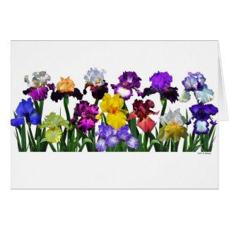 Jardin d'iris cartes de vœux