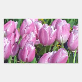 Jardin rose de tulipe de ressort autocollant en rectangle