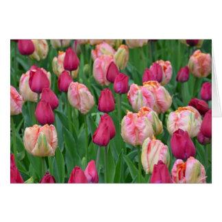 Jardin rose de tulipes de ressort cartes de vœux