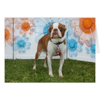 Jasmine - Boston Terrier Card