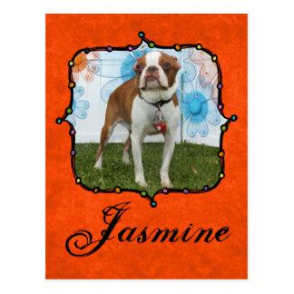 Jasmine - Boston Terrier Postcard