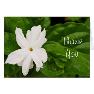 Jasmine Flower Greeting Card