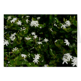 Jasmine Flowers Tropical White Floral Greeting Card