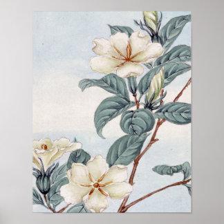 Jasmine Flowers (Vintage Japanese Art) Poster