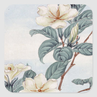 Jasmine Flowers (Vintage Japanese Art) Square Sticker