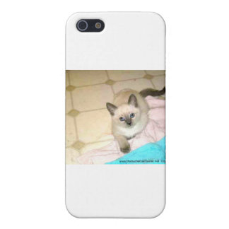 jasmine the siamese kitten i4 phone cover cover for iPhone 5/5S