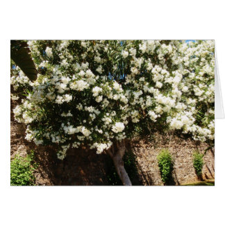 Jasmine Tree In Bloom Card