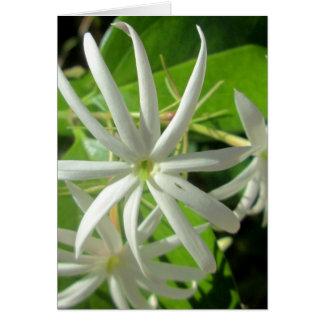 Jasmine White Green Flower Card