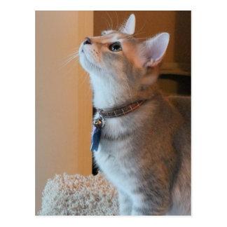 Jasper Blank Kitten Photo Postcard