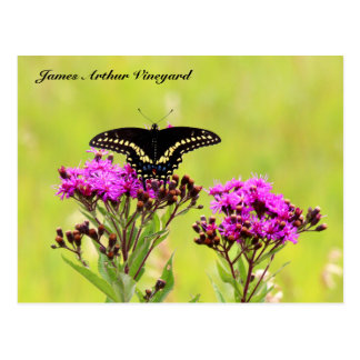 JAV Blackswallow Tail Butterfly 2013 PC 1 Postcard
