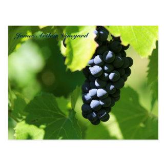 JAV St. Croix purple grapes 2014 100n Postcard
