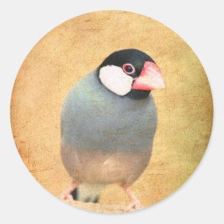 Java Sparrow Classic Round Sticker