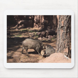 Javalina parents with a baby mouse pad