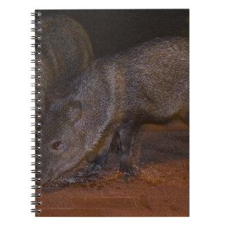 Javalina piggies notebook