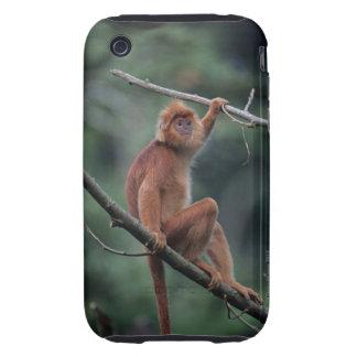 Javan black leaf monkey (Trachypithecus auratus) Tough iPhone 3 Case
