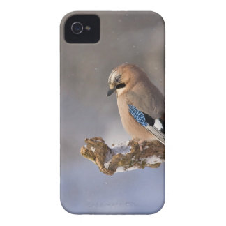 jay Case-Mate iPhone 4 cases
