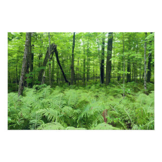 Jay Cooke State Park Ferns and Forest Photo Print