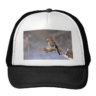 jay trucker hat