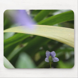 Je vous ai vus… Violettes sauvages - photographie Tapis De Souris