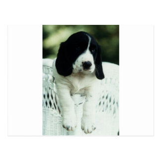 Jefferson the Basset/Border designer dog Postcard