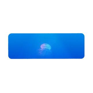 jellyfish-698521 SEA CREATURES ANIMALS BLUE OCEAN