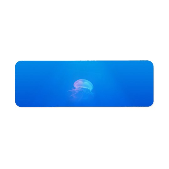 jellyfish-698521 SEA CREATURES ANIMALS BLUE OCEAN