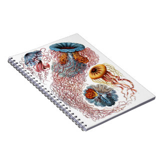 Jellyfish Journal