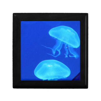 Jellyfish North Carolina Aquarium Gift Box
