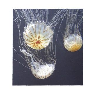 Jellyfish Notepads