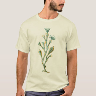 Jellyfish - Obelia geniculata T-Shirt