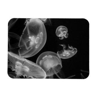 Jellyfish Underwater Magnet