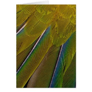 Jenday Conure Feather Design Card